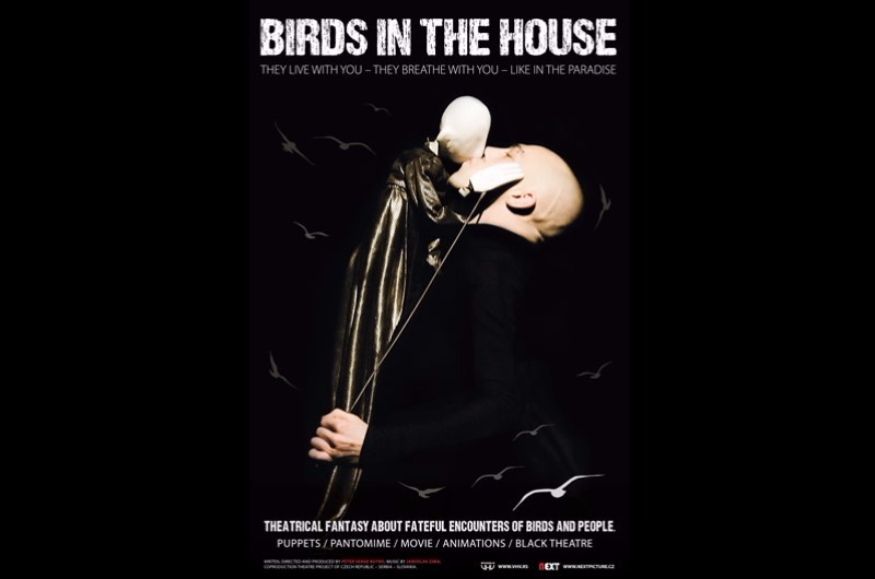 Birds in the house